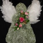 Gypsophila massed angel