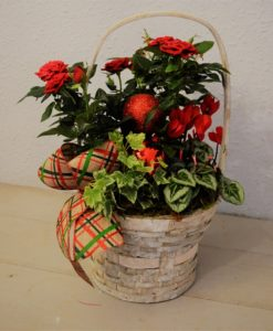 Christmas Planted gifts